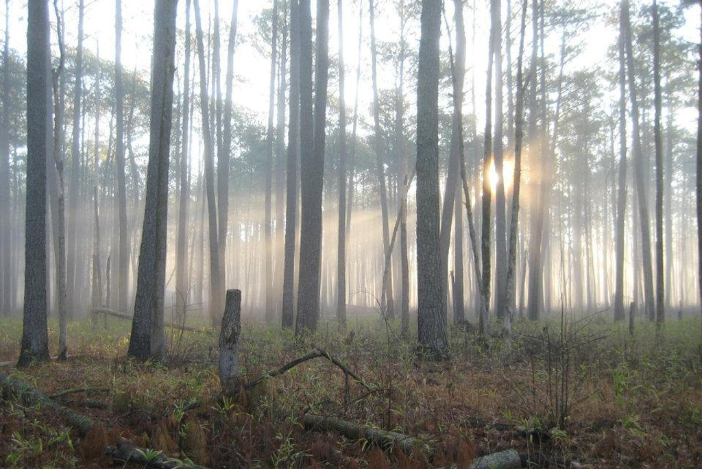 Pines Trail at Great Dismal Swamp National Wildlife Refuge along the NC-VA (Photo Credit: U.S. Fish and Wildlife Service Headquarters)