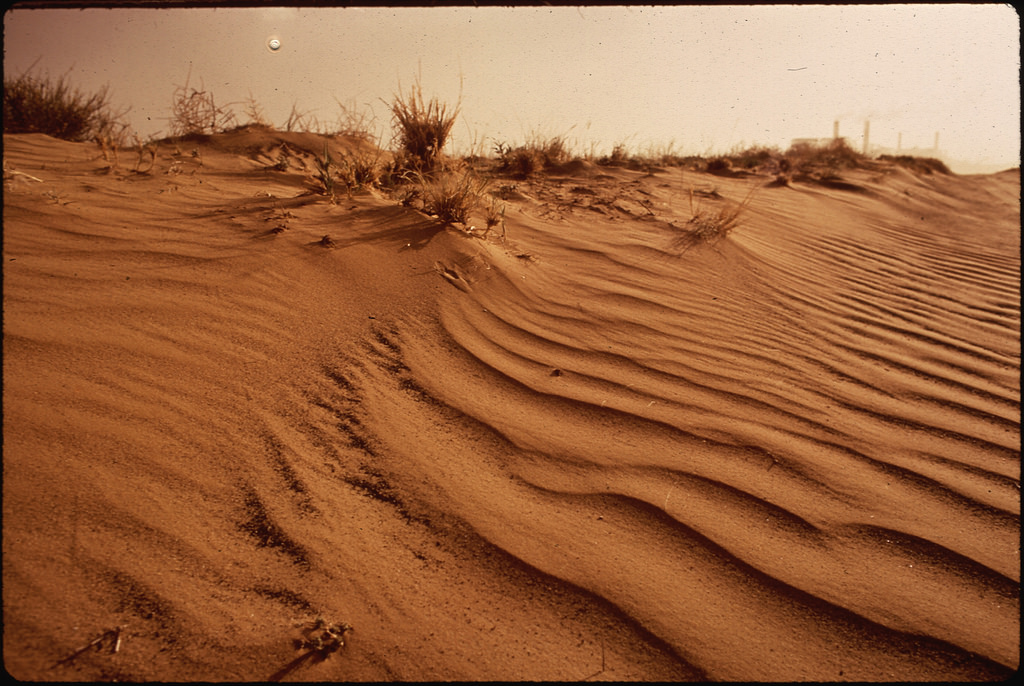 desert brush (Photo Credit: Terry Eiler, The U.S. National Archives)